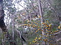 Kalianna Ridge, Budawang National Park 065.jpg