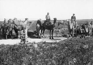 Kameler på Nicosiavägen. Marion - SMVK - C01145.tif