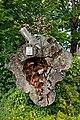 Kastanie (Sasbachwalden) jm52963 ji.jpg