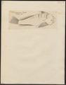 Kathetostoma laeve - 1700-1880 - Print - Iconographia Zoologica - Special Collections University of Amsterdam - UBA01 IZ13200033.tif