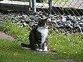 Katter (6061858643).jpg