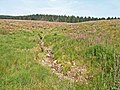 Kielder Forest, near Akenshawburn - geograph.org.uk - 209680.jpg