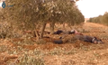 Killed ISIL fighters near Mahmudli.png