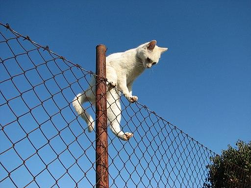 Kočka na plotě 02