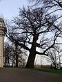 Kościół klasztorny reformatów, ob. par. pw. św. Mikołaja, 2 poł. XVIII Łabiszyn 20.JPG
