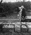 Koningin Juliana bezoekt de Rijks Landbouw Hogeschool te Wageningen vanwege het , Bestanddeelnr 904-7646.jpg