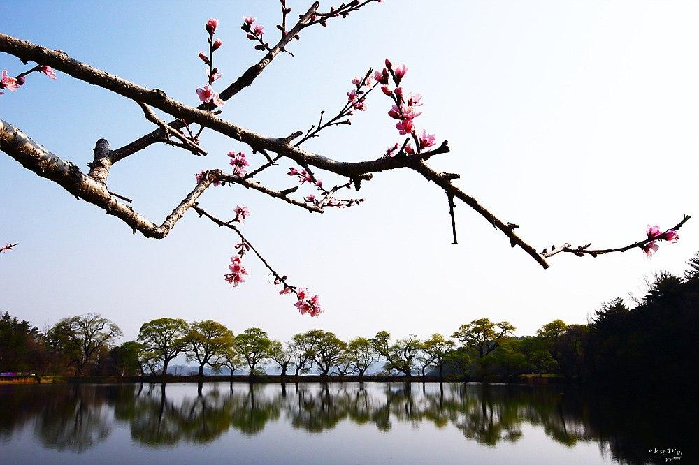 Lake With Peach Bloom (105700323).jpeg