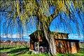 Landscape, saule de Collonge, HDR, 1000pix.jpg