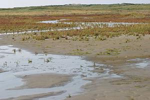 Rottumeroog - Landscape of Rottumeroog in September 2005