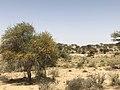 Landscape of Thar Desert.jpg