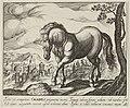 Landschap met paard uit Calabrië. NL-HlmNHA 1477 53011498.JPG