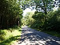 Lane across Duncton Common - geograph.org.uk - 204438.jpg