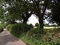 Lane near Brinning - geograph.org.uk - 1466192.jpg