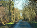 Lane through Hensol Forest - geograph.org.uk - 1156846.jpg