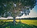Larache Forest 3.jpg