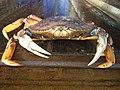 Large Dungeness Crab.jpg