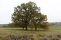 Lauterbach Frischborn Eisenbach Quercus Pastures Fieldstone Autumn Baronenweg E.png