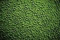 Leaf cells.jpg