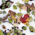 Leaves in the snow (13082581305).jpg