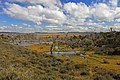 Lesy u Russfinu - panoramio.jpg