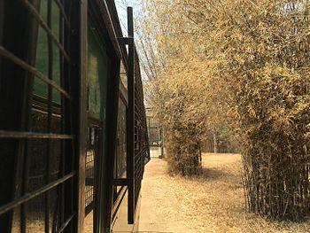 Lion safari at Bannerghatta National Park, Bangalore.jpg