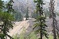 Little Yoho Valley IMG 5190.JPG