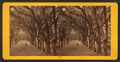 Live Oak Avenue, Bonaventure, from Robert N. Dennis collection of stereoscopic views 12.png