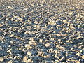 Loam soil of Hesbaye.jpg