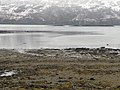 Loch Carron shoreline - geograph.org.uk - 1801322.jpg