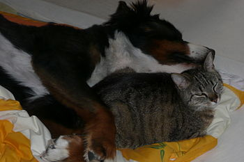 English: Lola (dog) and Lieschen (cat). Deutsc...