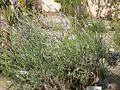 Lorto-botanico-di-padova-2016 27757185784 o 36.jpg