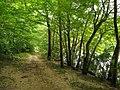 Lower Haw River Trail 2.jpg
