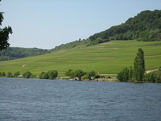 Moselle Valley - Vinyards along the Moselle Valley near Machtum, Luxembourg