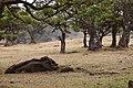 MADEIRA 2012 - panoramio.jpg