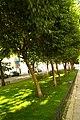 MADRID A.V.U. JARDIN-CINTA S. FRANCISCO EL GRANDE - panoramio (10).jpg