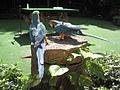 Macaws, Jurong BirdPark 3.JPG