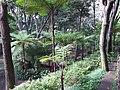 Madeira - Monte - Jardim Tropico (2092623511).jpg