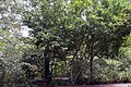 Magnolia x Ann 4zz.jpg