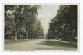 Main Street Elms, Stockbridge, Mass (NYPL b12647398-75756).tiff
