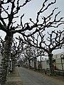 Mainz 30.03.2013 - panoramio (15).jpg