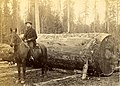 Man on a horse in front of a large log, Wshington, circa 1889-1891 (BOYD+BRAAS 139).jpg
