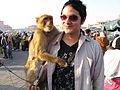 Marco the Monkey (2242327371).jpg