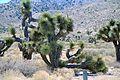 Maricopa County, AZ, USA - panoramio.jpg