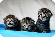 A trio of newborn kittens