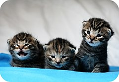 Mathias-erhart - kittens (by-sa)