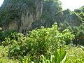 Maya Bay P1120658.JPG