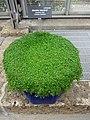 Medicinal Plants - US Botanic Gardens 25.jpg