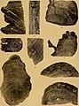 Memorie della Reale accademia delle scienze di Torino (1911) (14587645647).jpg