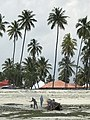 Men burn a boat on the shores of Zanzibar in front of a row of palm trees.jpg