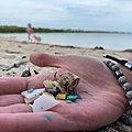 Microplastic-found-key-largo-beach-state-park.jpg